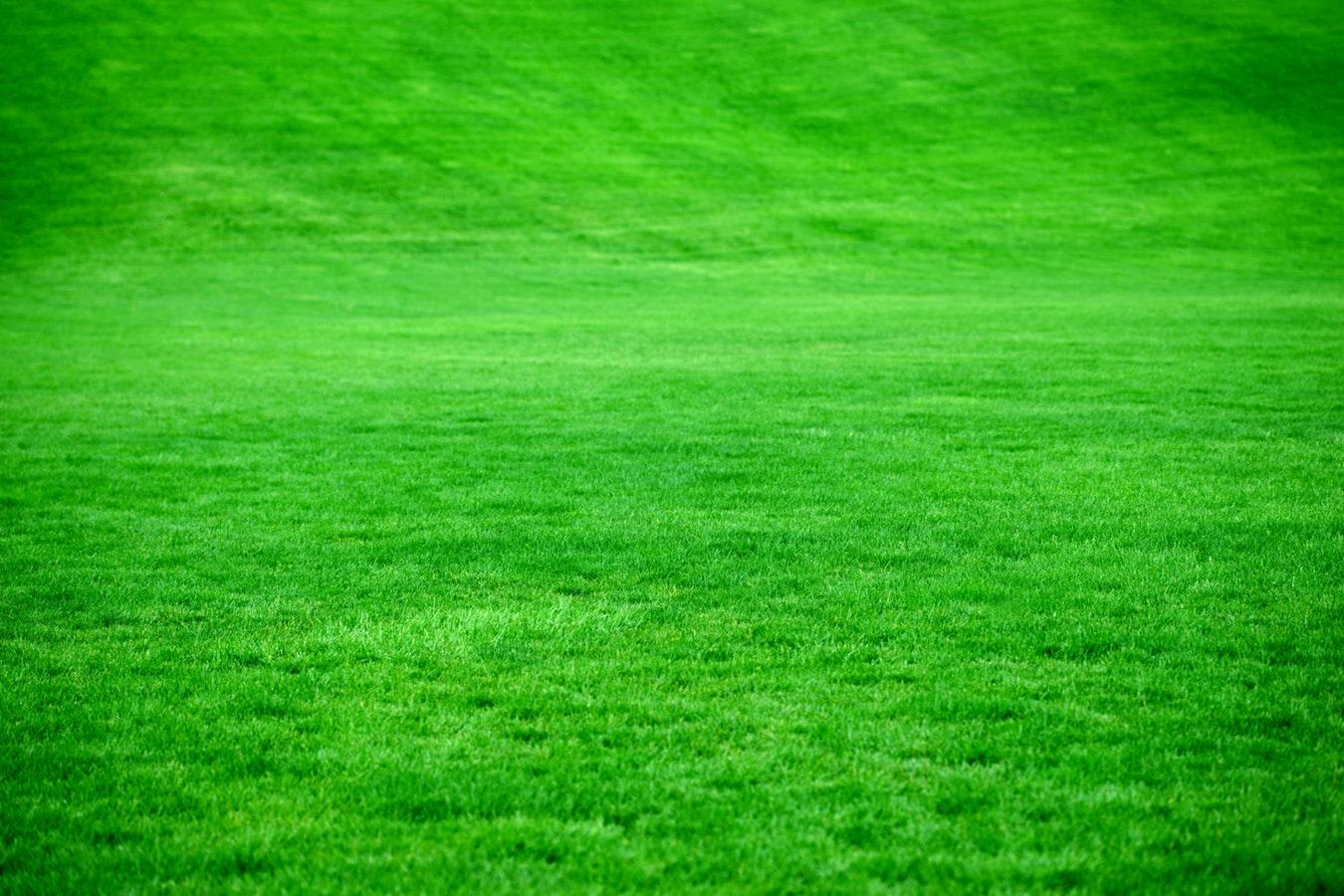 Topdressing til en grønnere græsplæne