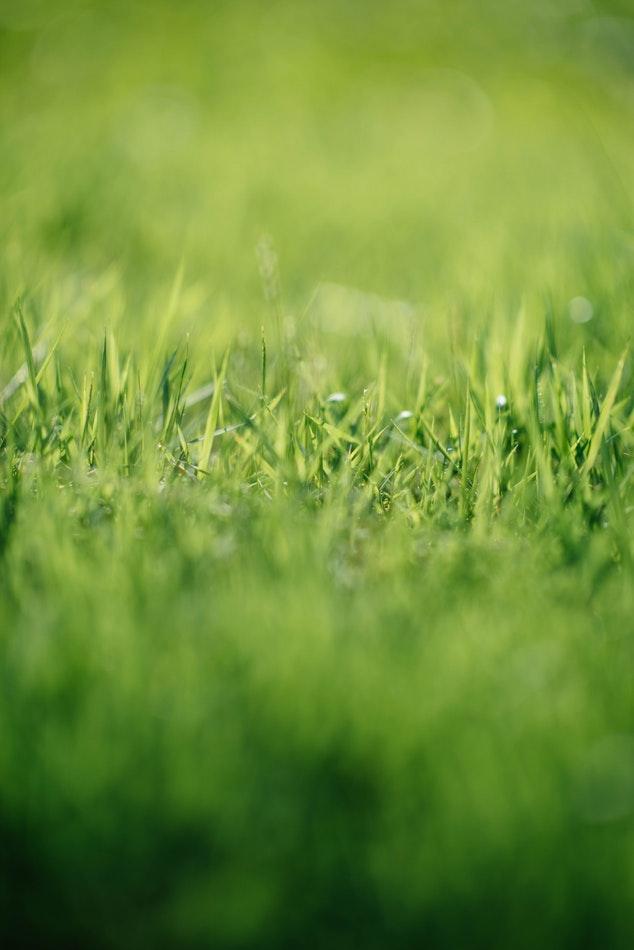 Er græsset grønnere på den anden side?